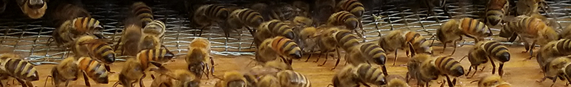 bee_banner_small.png